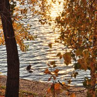 Золотая осень на Енисее :: Екатерина Торганская