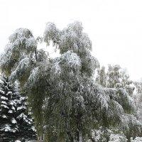 первый снег :: Евгений Вяткин