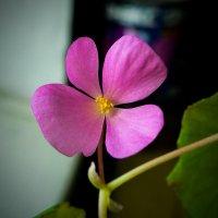 Красота в простоте :: Алла Рыженко