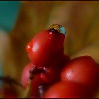 Осенние макро... :: анна нестерова