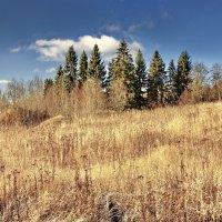 Осень в лесу :: Валерий Талашов