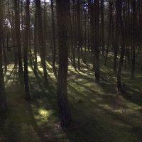 В лесу :: Elena Ignatova