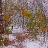 Первый снег---23 :: Владимир Холодный