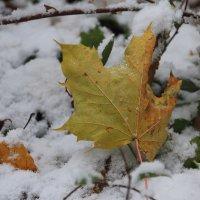 Первый снег.... :: Tatiana Markova