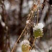 Выпал снег :: Дмитрий Арсеньев
