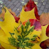 Топ! Топ! Осень! Не могу пройти мимо твоей красоты невероятной! :: Ольга Кривых