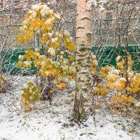 Снег в октябре 4 :: Виталий
