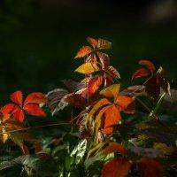 Осенняя палитра :: Павел Руденко