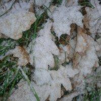 Листья в снегу :: Сапсан