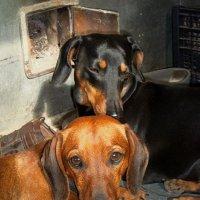 Теплая любовь Тиши и Марсика. :: Владимир Ильич Батарин