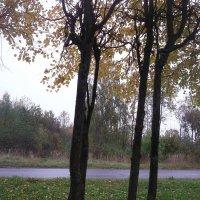 Осень наступила :: Svetlana Lyaxovich