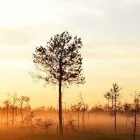Закатное болото :: Владимир Брагилевский