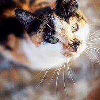 Маленькая красавица :: Дарья Семенова