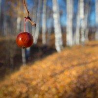 Мелодии уходящей осени... :: Роман Царев