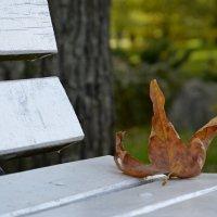 Осень золотая :: Ольга Степанова