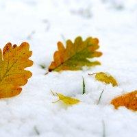 Листья в снегу :: Марина Романова