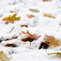 Первый снег :: Марина Романова