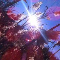 осеннее солнце :: Карина Чечель
