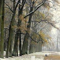 Первый снег  /1/ :: Сергей