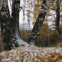 Первый снежок :: Валерий Чепкасов