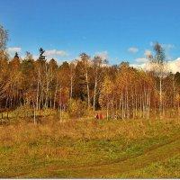 Прогулки  золотой осенью :: Вячеслав Минаев