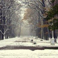Первый снег  /5/ :: Сергей
