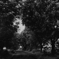 road :: Юля Рудакова