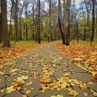 Осенняя дорожка :: Юрий Кольцов