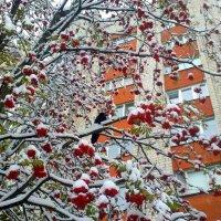 ворона на ветках - на земле сугробы... :: Александр Прокудин