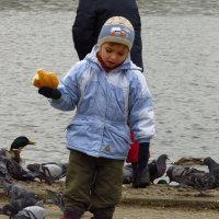 Кто птиц кормит, тот с ними и играет :: Андрей Лукьянов