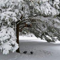 Внезапный снегопад :: Милешкин Владимир Алексеевич