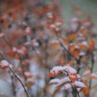 Первый снегопад в Царском Селе.... :: Tatiana Markova
