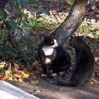 У котов и в октябре бывает март :: Татьяна Смоляниченко