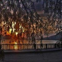 за занавескою ветвей морской залив в закате светит :: viton