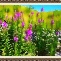 Цветное лето :: Любовь Чунарёва
