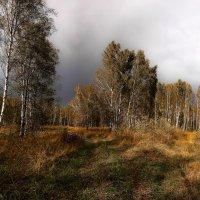 Обуяла осень золотая 2 :: Сергей Жуков