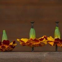 три пачки :: Ирина Солощ