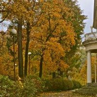 петербургская осень :: Елена