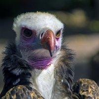 Белый орел :: Сергей Фомичев