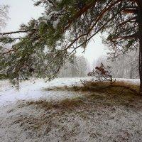 И слышатся песни, осени снежной 15 :: Сергей Жуков