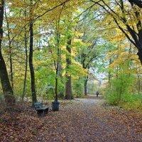 Наносит краски осень кистью,  На холст оранжевых кустов.... :: Galina Dzubina