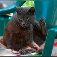 Кошка из города Геническ :: Александр