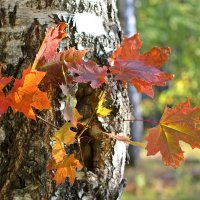 Осенний этюд на природе :: Лидия (naum.lidiya)