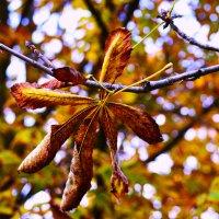 Осень золотая :: Ирина Божко