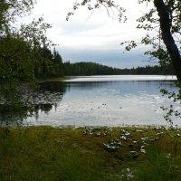 Озеро на острове Анзер :: Антонина Петлевская