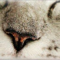 Здоровый нос, здоровый сон :: Кай-8 (Ярослав) Забелин