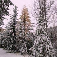 осень и зима :: Татьяна