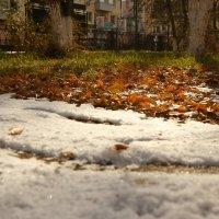Три цвета осени :: Марина Мишутина