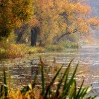 Осень,дождь,но красота. :: Наталья Соколова