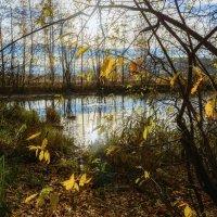 Осенние листья :: vladimir